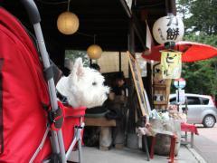 mainichigatanjyobidakara1.jpg