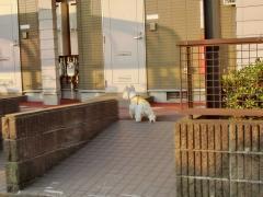 nibyouwoousiroinuha3.jpg