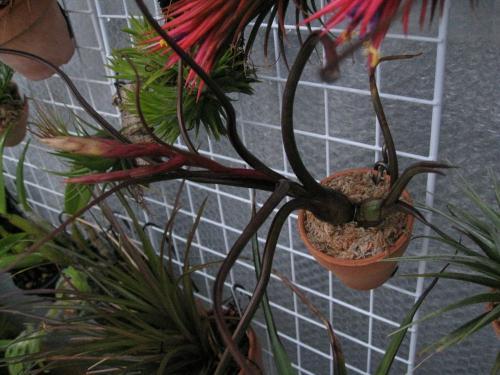 鉢植え (4)