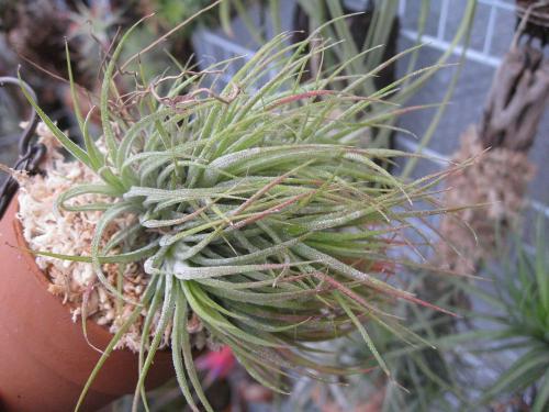 鉢植え (7)