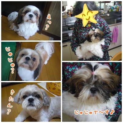 090923_tqcj_fumi_03.jpg