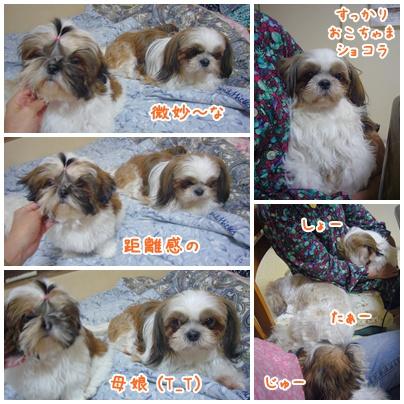 090923_tqcj_fumi_04.jpg