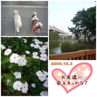 091003_sampo_02.jpg