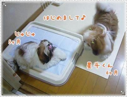 091011_ju_seito_02.jpg