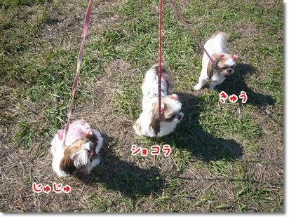 091012_dogrun_03.jpg