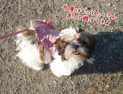 091012_dogrun_88.jpg