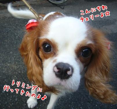 091020_happydog_01.jpg