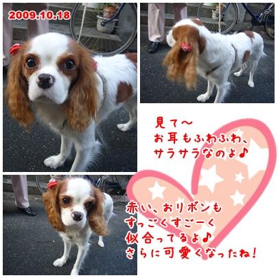 091020_happydog_02.jpg