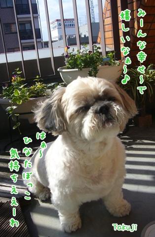 091020_happydog_06.jpg