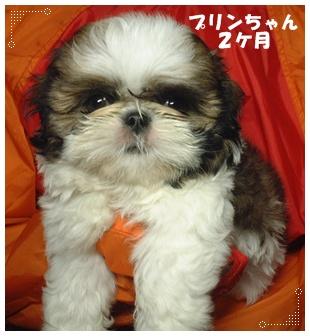 091020_happydog_07.jpg