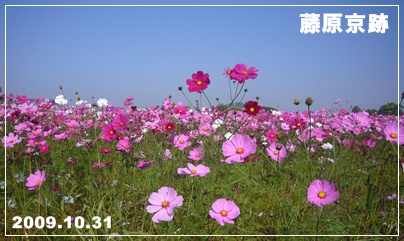 091031_cosmos_01.jpg