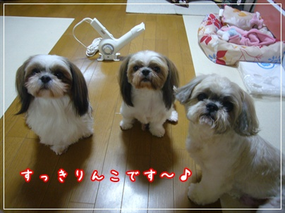 091108_shampo_00.jpg