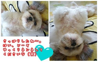 091108_shampo_03.jpg