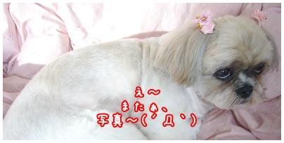 091115_tachoco_04.jpg