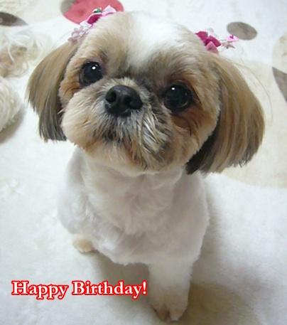 110518_juju_birthday_03.jpg