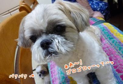110706_tq_bachan_02.jpg