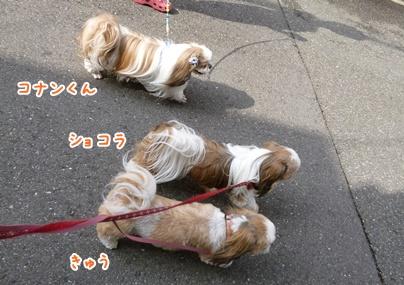 110708_tqck_walk_04.jpg