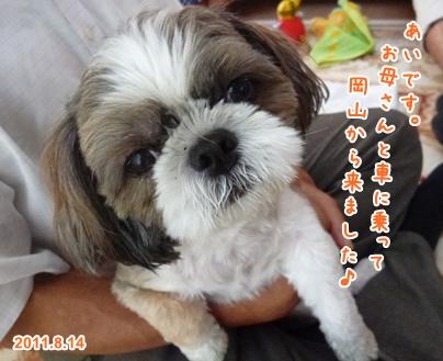 110814_ai_u_01.jpg