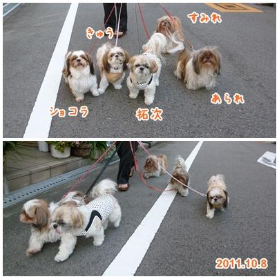111008_sanpo_tqcsa_04.jpg