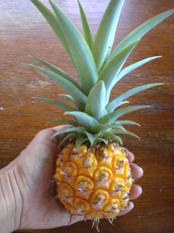 20090825small_pineapple.jpg