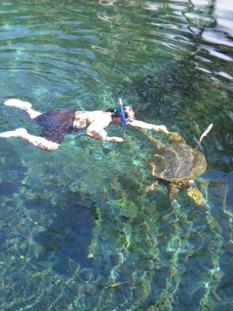 honuswimming1.jpg