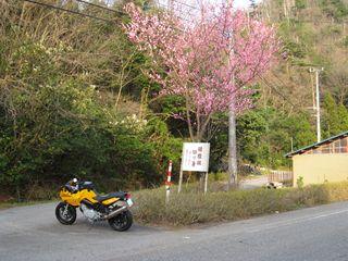 春の加賀路