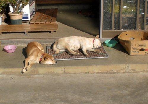 日だまりの中で昼寝