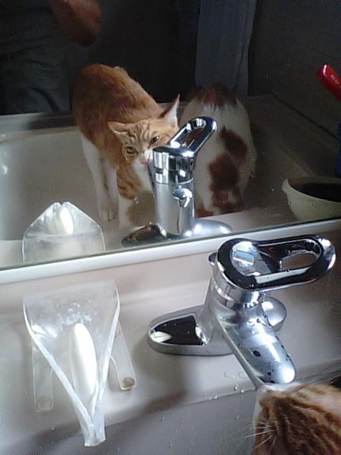 8.23水のみネコ
