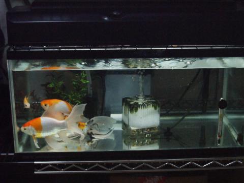 金魚も喜んでます^^