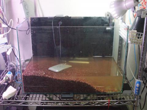 熱帯魚も汚いです><