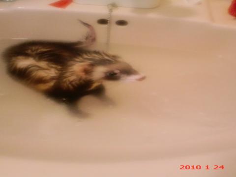 ピーちゃん 風呂