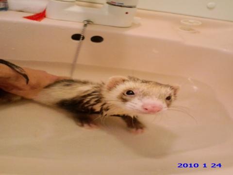ネギ 風呂