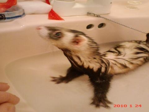 ハル 風呂