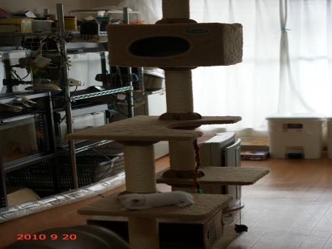 DSC02123_convert_20100920104758.jpg