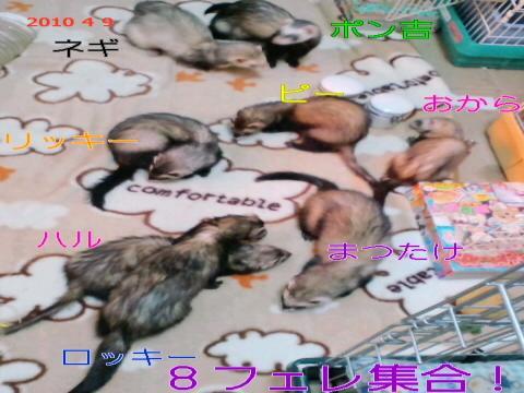 PAP_0001_convert_20100410073230.jpg
