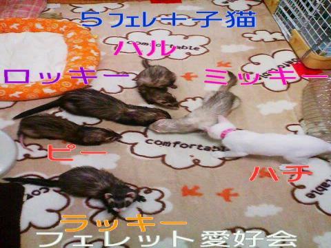 PAP_0004_convert_20101030203319.jpg