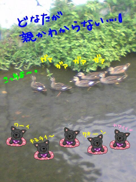 Image221karuchan.jpg