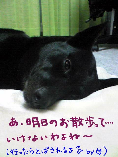 arashi3.jpg