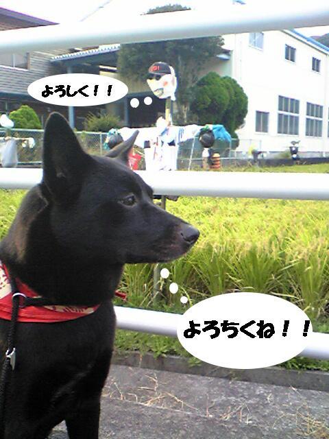 kakashi1.jpg
