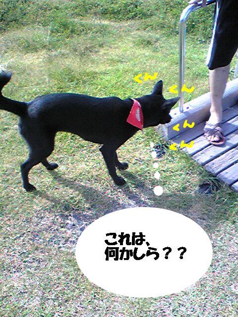 shi-so-.jpg