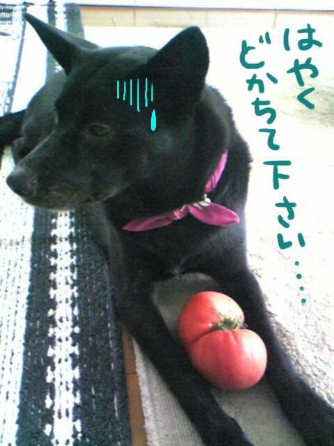 tomatokirai.jpg