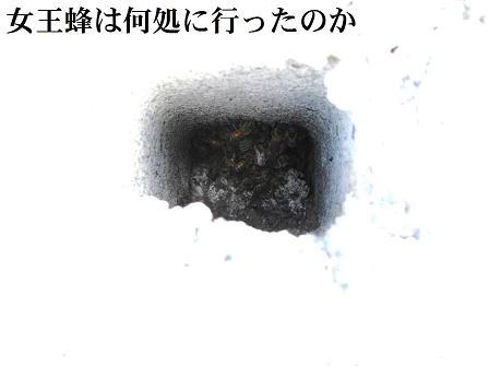 みっばち1-3