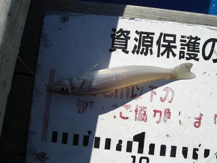 黒鯛4-5