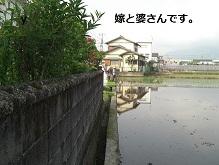 2011年田植え2