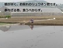 2011年田植え3