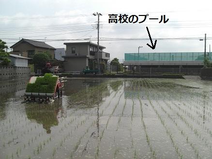 2011年田植え4