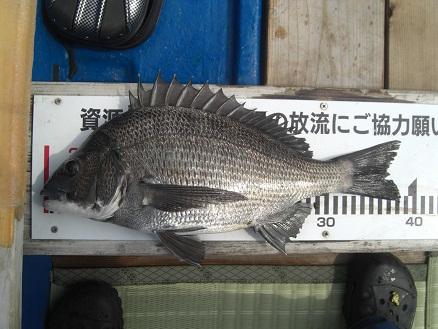 黒鯛38-6