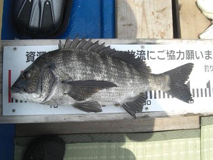 黒鯛38-7
