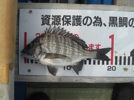 黒鯛38-8