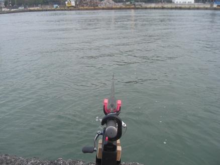 黒鯛40-1